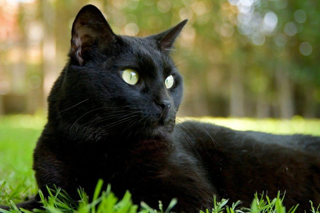 Die reichste Katze der Welt