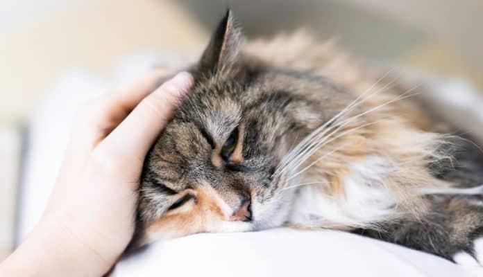 Durchfall Bei Katzen Das Ist Zu Tun Schritt Für Schritt