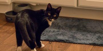 Fremde Katze im Haus