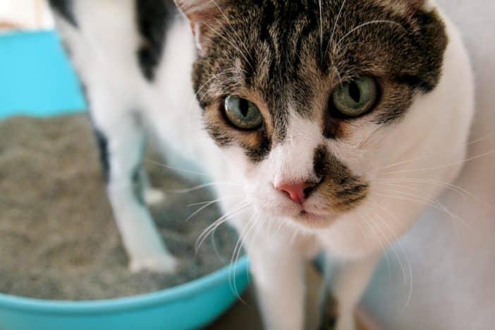 Katze Durchfall Stuhlprobe
