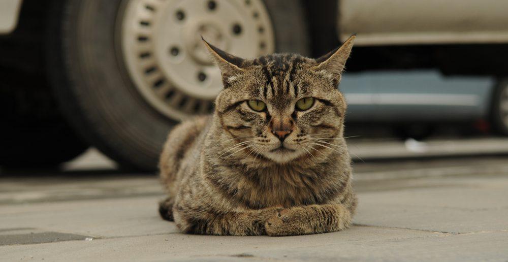 Katze Freigänger Auto Gefahr