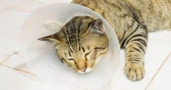 Katze Halskrause Alternativen