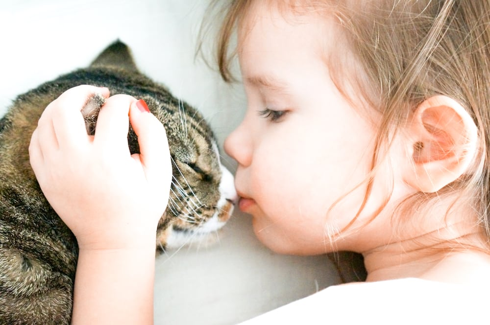 Katze gibt Köpfchen, Katzenkuss
