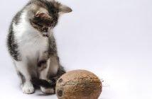 Katze Kokosöl