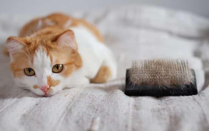 Katze Schuppen Tipps
