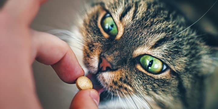 Katze Erbricht Nachts