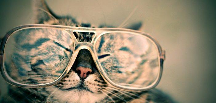 Katze Taurin