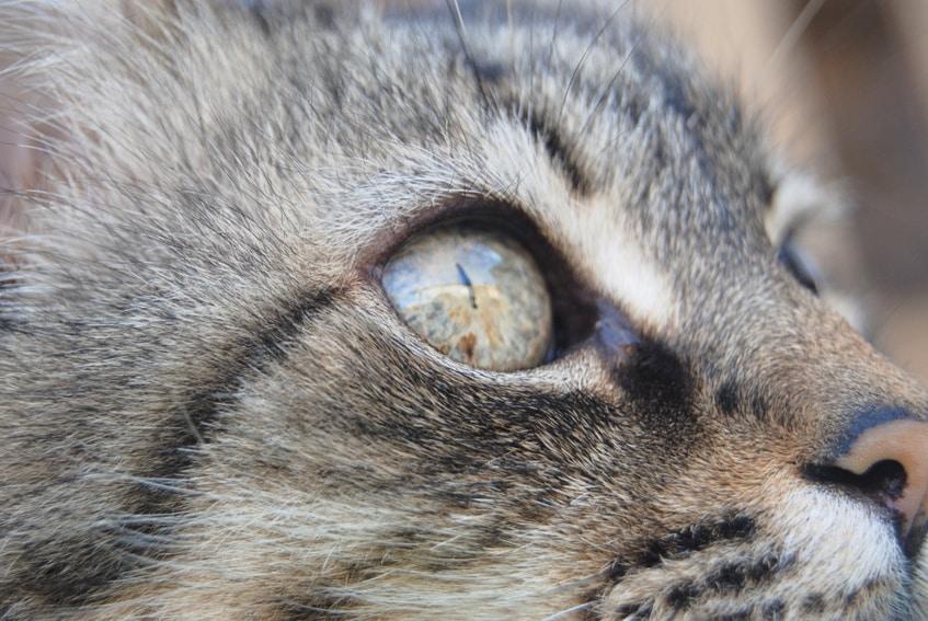 Katze Taurin Mangelerscheinungen