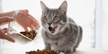 Katze Trockenfutter ungesund
