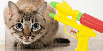 Katze Wasserpistole