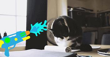 Katze sitzt auf dem Tisch und wird mit der Wasserpistole bestraft