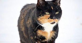 Katze Winter
