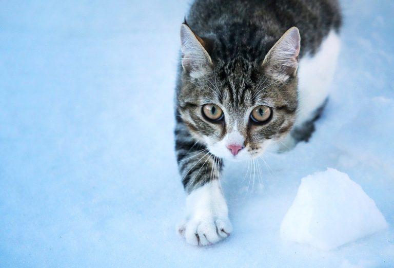 Katze Winter Kälte