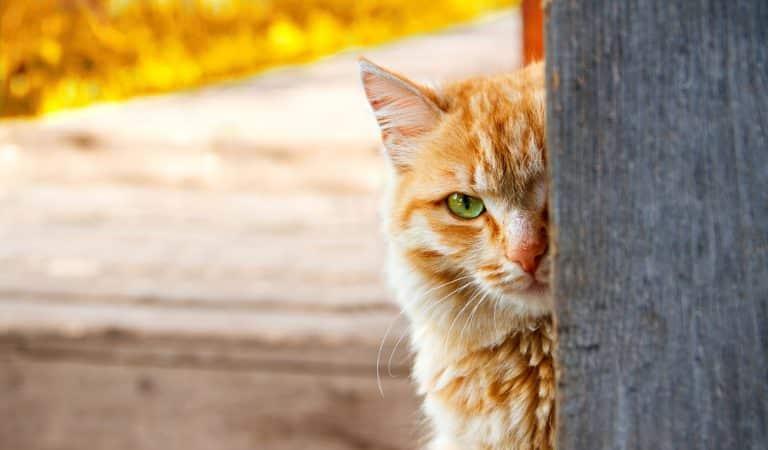 Katzen als Spione – Unglaubliche CIA-Operation im Kalten Krieg
