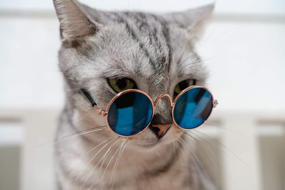 Katze als Spion im Kalten Krieg