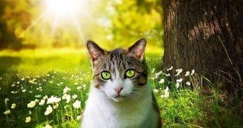 Katze an Freigang gewöhnen