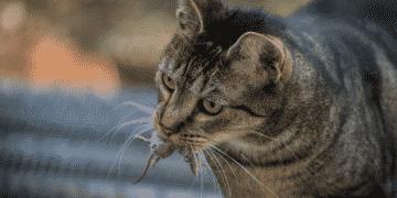 Katze bringt Mäuse nach Hause