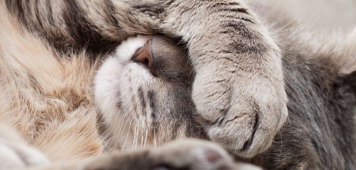 Katze erkältet