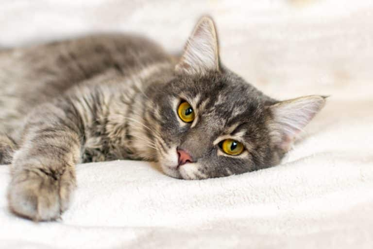 Katze mit Erkältung
