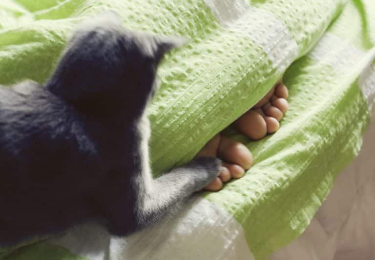 Katze greift Füße an