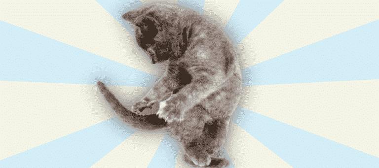 Katze jagt ihren eigenen Schwanz
