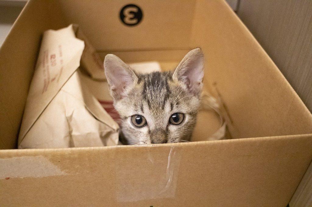 Katze in einem Karton