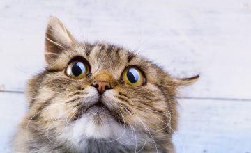 Katze rennt wie verrückt durch die Wohnung (2)