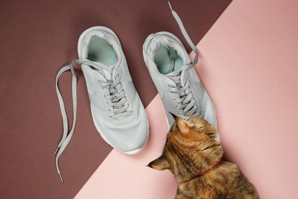 Katze schnüffelt an Schuhen
