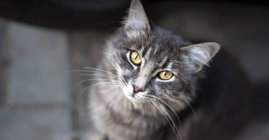 Katze zugelaufen was ist mit einer fundkatze zu tun katzenkram - Katzenklo im garten was tun ...
