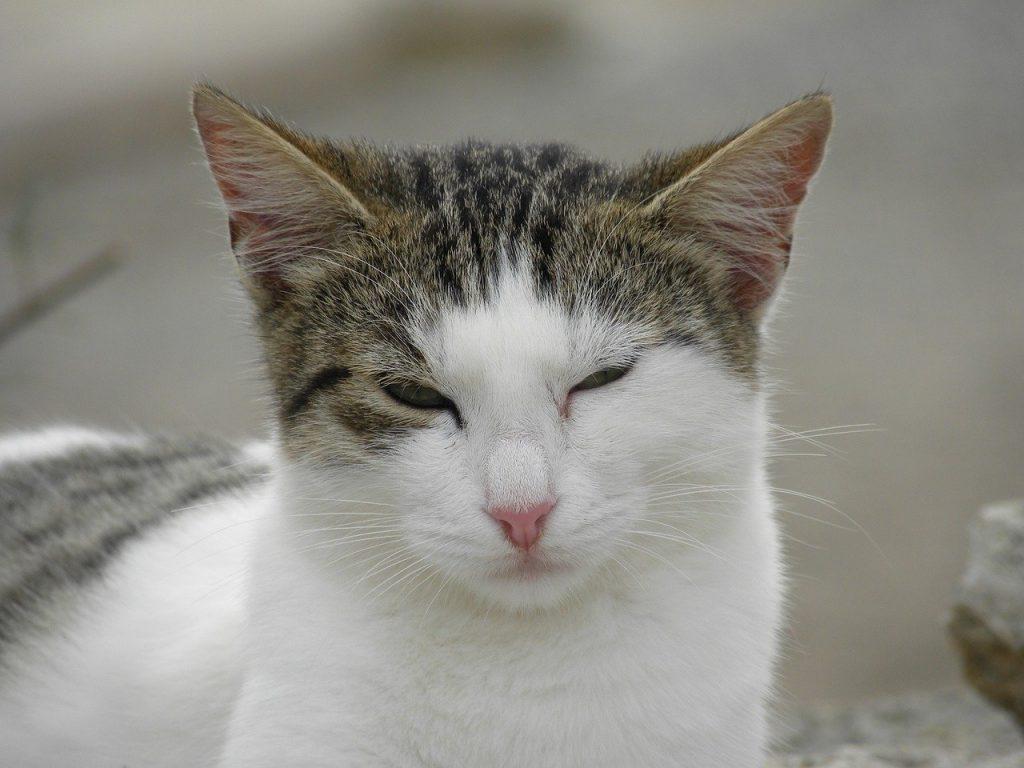 Katze zwinkert oder blinzelt
