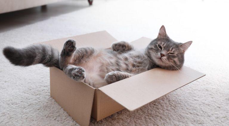 Katzen Kartons