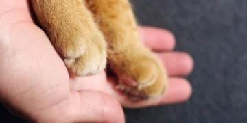 Katzen Krankenversicherung