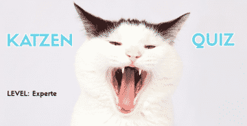 Großes Katzen Quiz Level: Experte