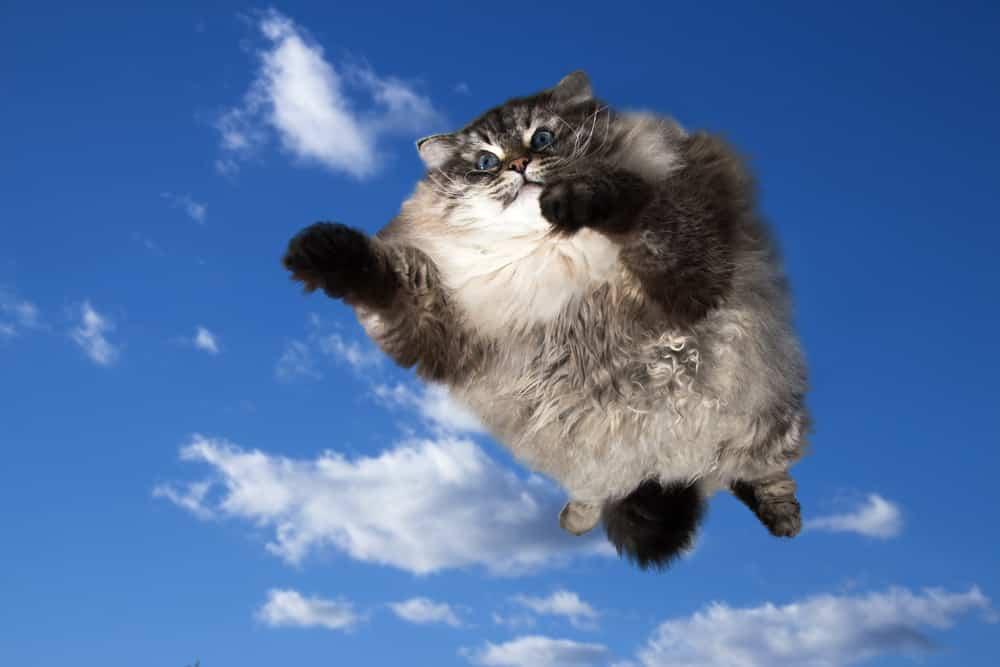 Katzen können auch Stürze aus großen Höhen überleben