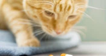 Katzen Tabletten geben