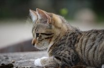 Katzenbaby erziehen