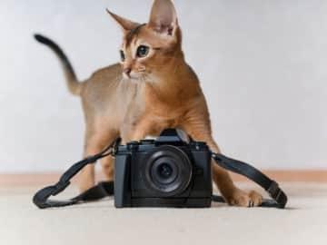Katzenbilder gibt es viele im Netz. Hier sind die 30 schönsten für dich