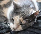 Katzenhaare entfernen – So hältst du Kleidung und Wohnung (fast) haarfrei