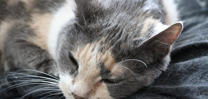 Katzenhaare Entfernen So Hältst Du Kleidung Und Wohnung Fast