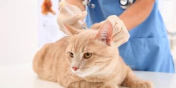 Katzenimpfungen