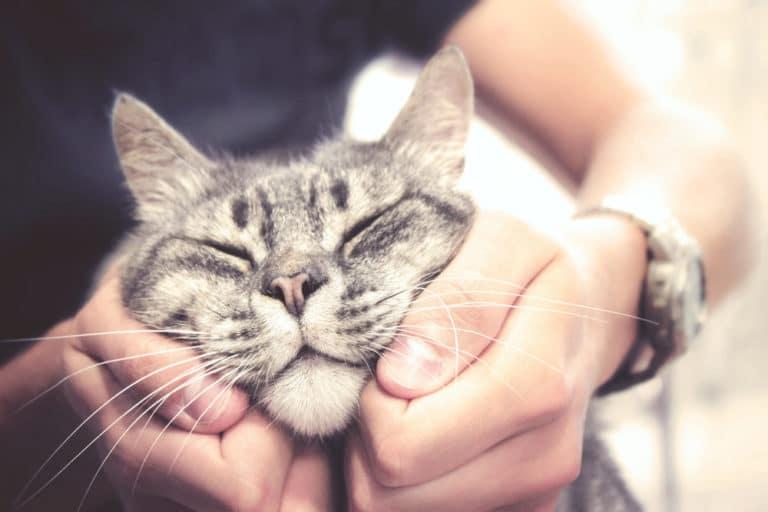 Katzeliebe - So zeigen Katzen ihre Zuneigung