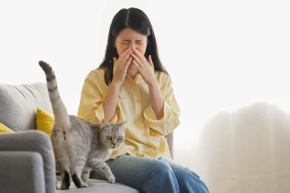 Katzenurin Geruch entfernen