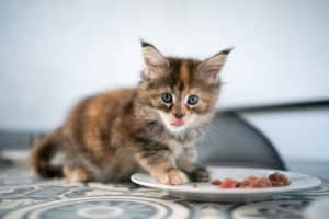 Kitten füttern