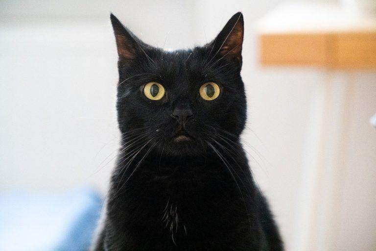 Vorurteile und Klischees über Katzen