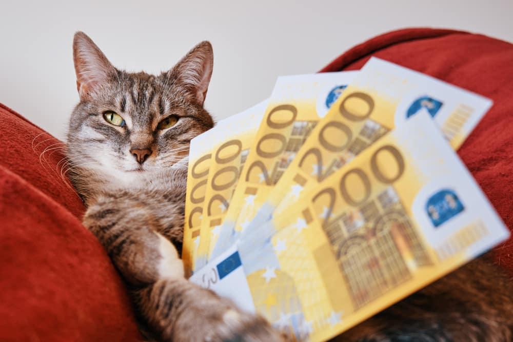 Krankenversicherung Katze Kosten