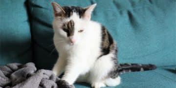 Milchtritt erwachsene Katze