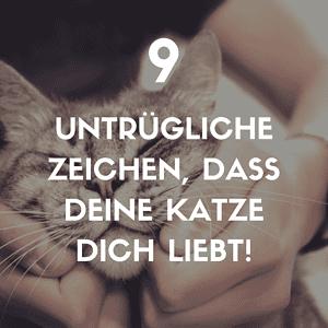 9 Zeichen, dass deine Katze dich liebt!