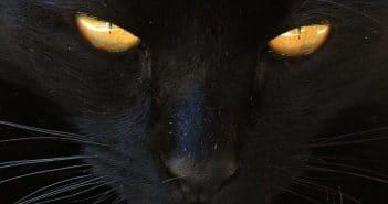 Schwarze Katze Unglück Aberglaube