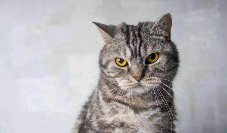 Sind Katzen wirklich nachtragend?