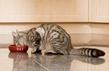 Taurin Katze